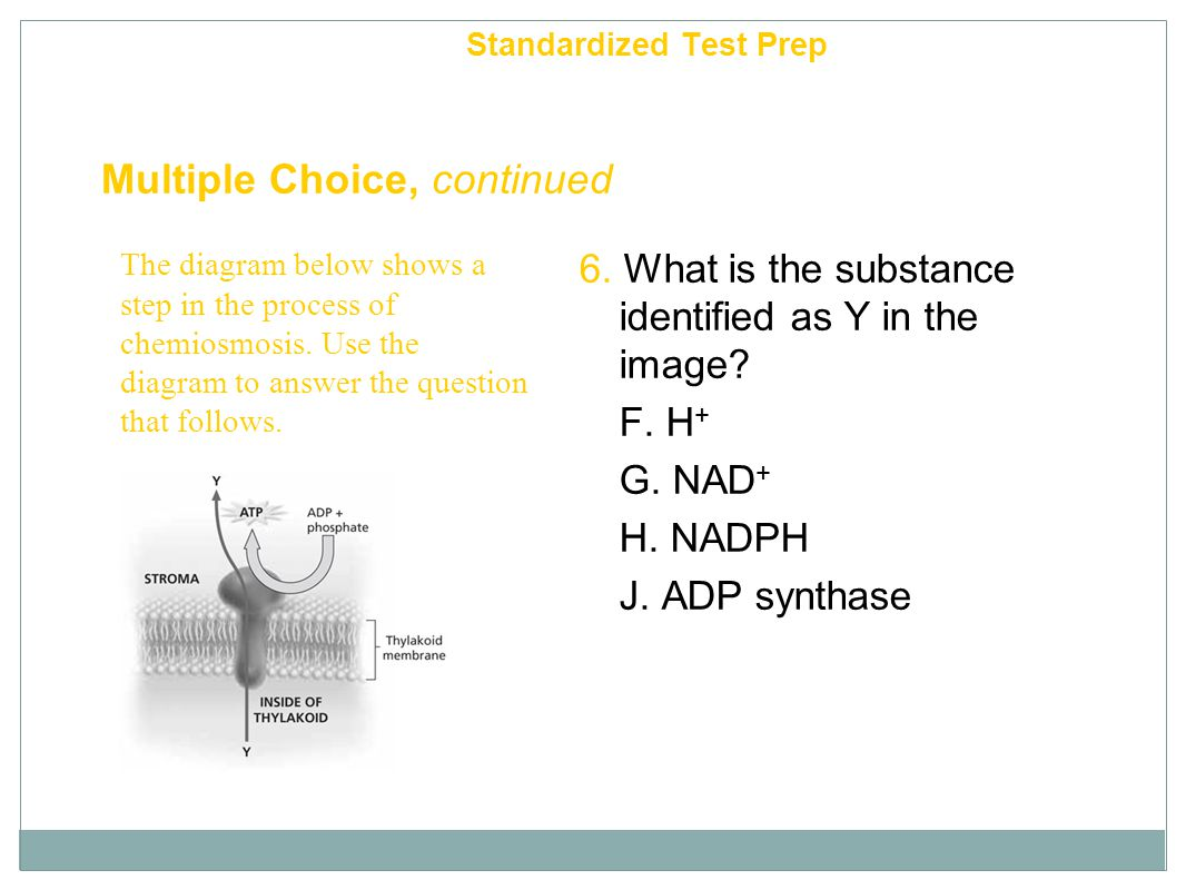 Multiple Choice, continued 5. light reactions : ATP :: Calvin cycle : A. H + B. O 2 C. G3P D. H 2 O Chapter 6 Standardized Test Prep