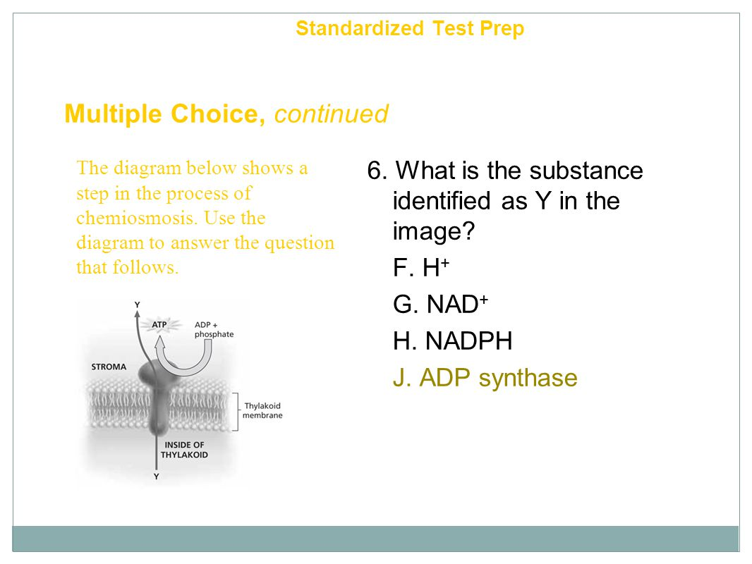 Multiple Choice, continued 6. What is the substance identified as Y in the image? F. H + G. NAD + H. NADPH J. ADP synthase Chapter 6 Standardized Test