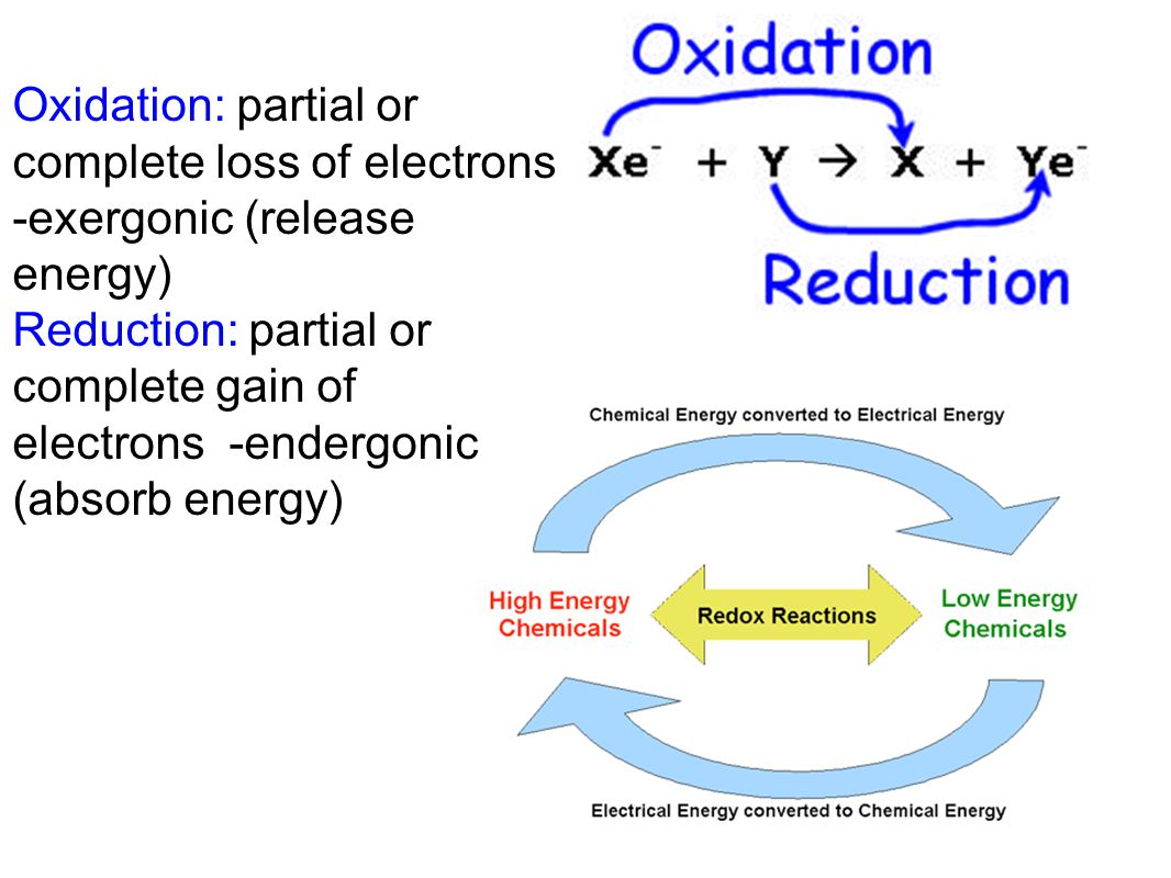 Light-Dependent Reactions These high-energy electrons are passed on to the electron transport chain.