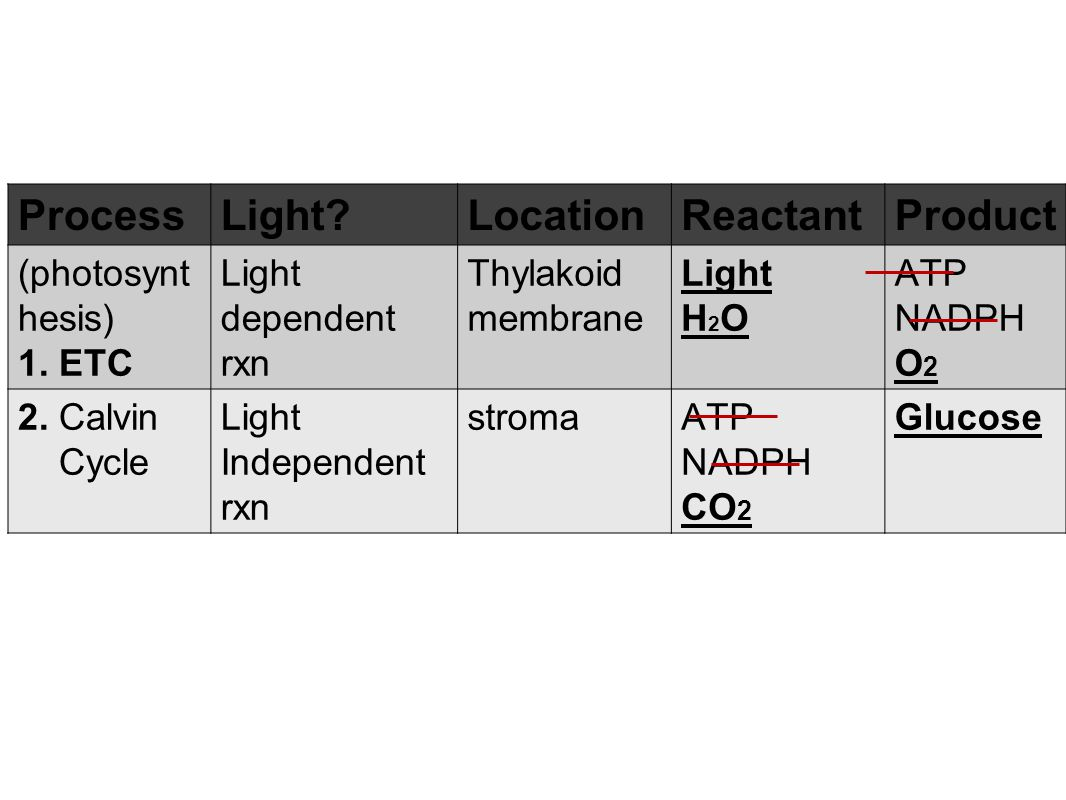QOD: photosynthesis copy and fill out this table as best you can. ProcessLight?LocationReactantProduct (photosynt hesis) 1. ETC 2. Calvin Cycle 3. Rel