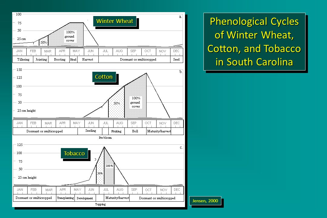 Phenological Cycles of Winter Wheat, Cotton, and Tobacco in South Carolina Jensen, 2000 Winter Wheat CottonCotton TobaccoTobacco