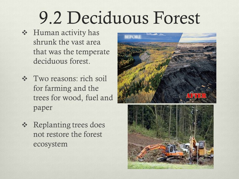 9.2 Deciduous Forest  Human activity has shrunk the vast area that was the temperate deciduous forest.  Two reasons: rich soil for farming and the t