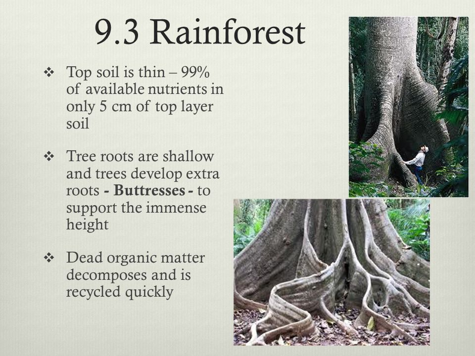 9.3 Rainforest  Top soil is thin – 99% of available nutrients in only 5 cm of top layer soil  Tree roots are shallow and trees develop extra roots -