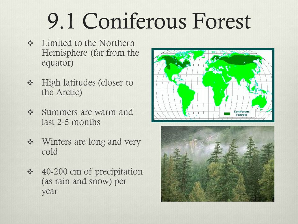 9.1 Coniferous Forest  Coniferous means cone bearing  Conifers (coniferous trees) producer seeds in cones  Leaves have adapted to conserve water by producing long-thin with a thick waxy coat called needles