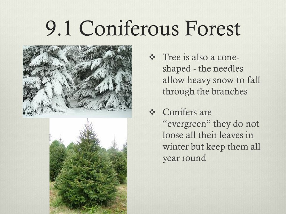 9.1 Coniferous Forest  Examples of conifers: Hemlock, Spruce, Cedar, Pine  Forests are not diverse – usually only one or two types of pine.