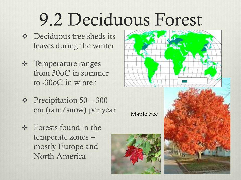 9.3 Rainforest Deforestation