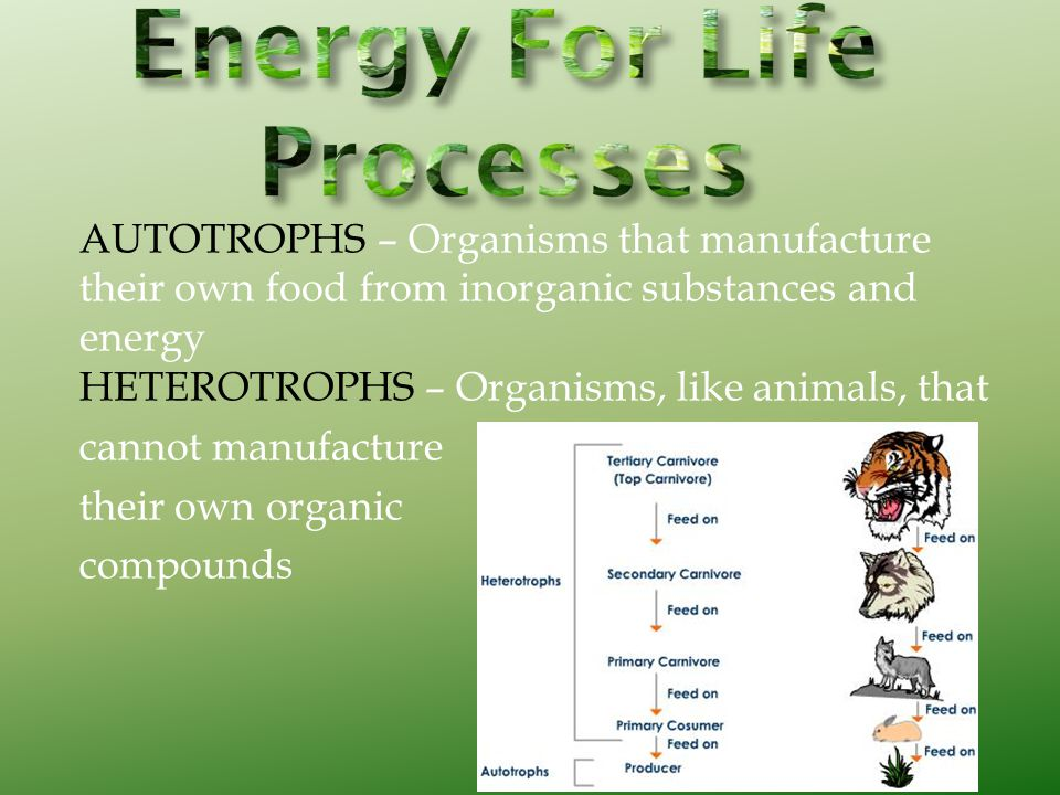 AUTOTROPHS – Organisms that manufacture their own food from inorganic substances and energy HETEROTROPHS – Organisms, like animals, that cannot manufa