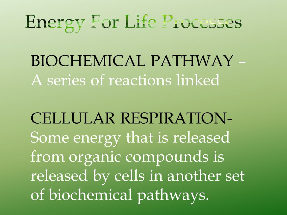BIOCHEMICAL PATHWAY – A series of reactions linked CELLULAR RESPIRATION- Some energy that is released from organic compounds is released by cells in a