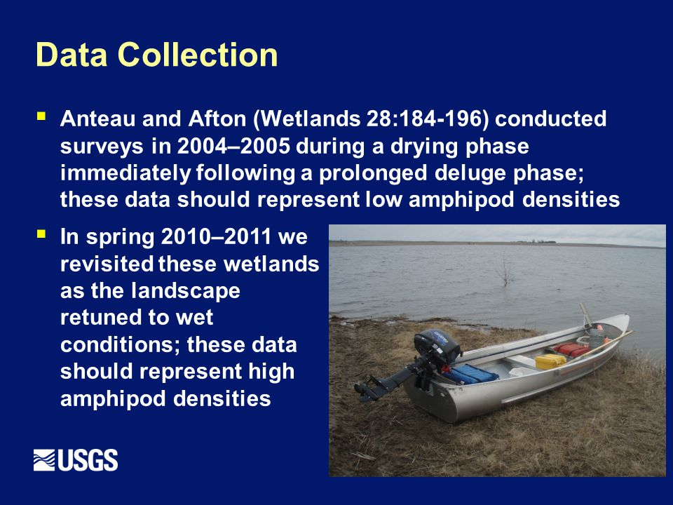 Data Collection  Anteau and Afton (Wetlands 28:184-196) conducted surveys in 2004–2005 during a drying phase immediately following a prolonged deluge phase; these data should represent low amphipod densities  In spring 2010–2011 we revisited these wetlands as the landscape retuned to wet conditions; these data should represent high amphipod densities
