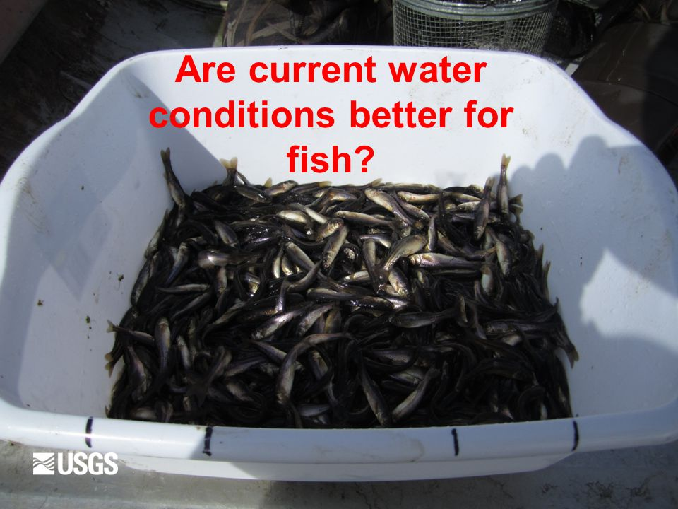 Are current water conditions better for fish