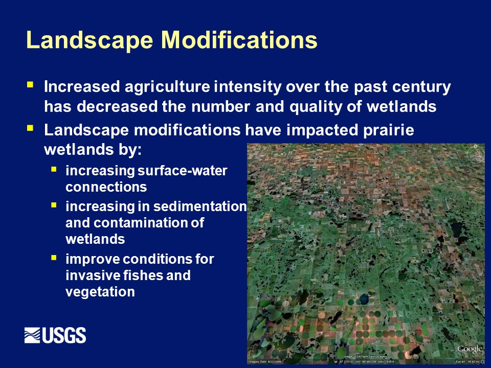 Landscape Modifications  Increased agriculture intensity over the past century has decreased the number and quality of wetlands  Landscape modifications have impacted prairie wetlands by:  increasing surface-water connections  increasing in sedimentation and contamination of wetlands  improve conditions for invasive fishes and vegetation