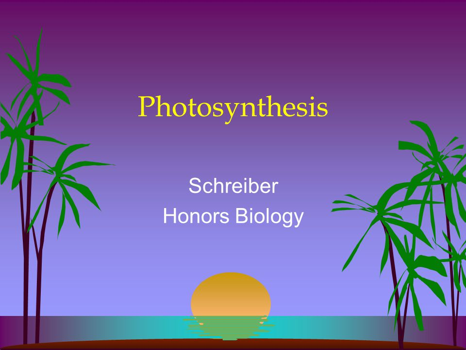 Photosynthesis Schreiber Honors Biology
