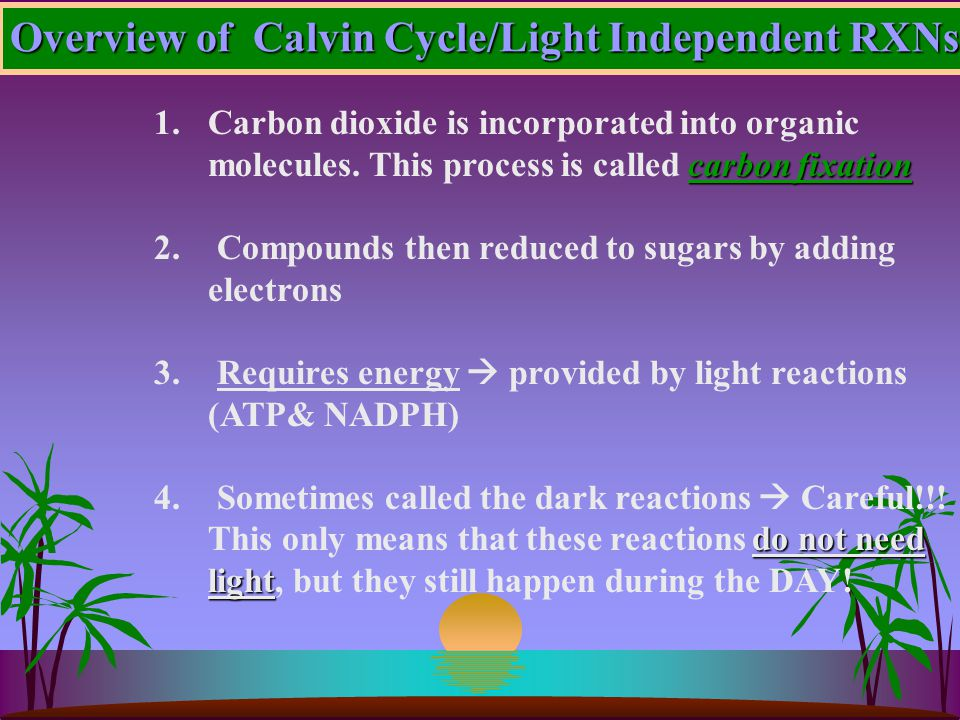 Overview of Calvin Cycle/Light Independent RXNs carbon fixation 1.Carbon dioxide is incorporated into organic molecules.