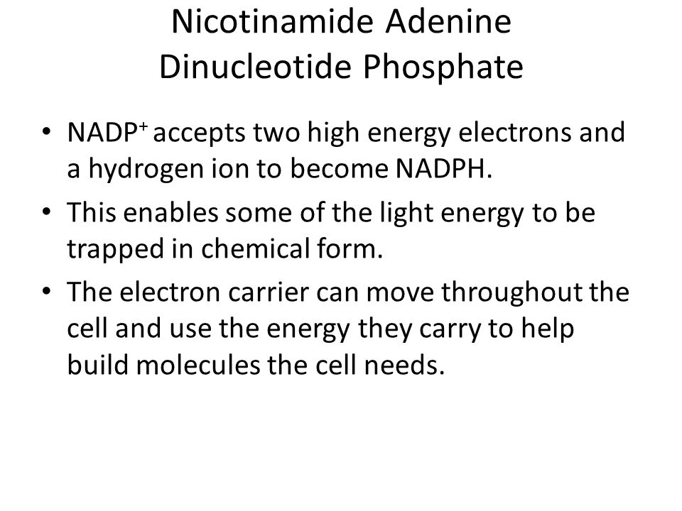 Nicotinamide Adenine Dinucleotide Phosphate NADP + accepts two high energy electrons and a hydrogen ion to become NADPH. This enables some of the ligh