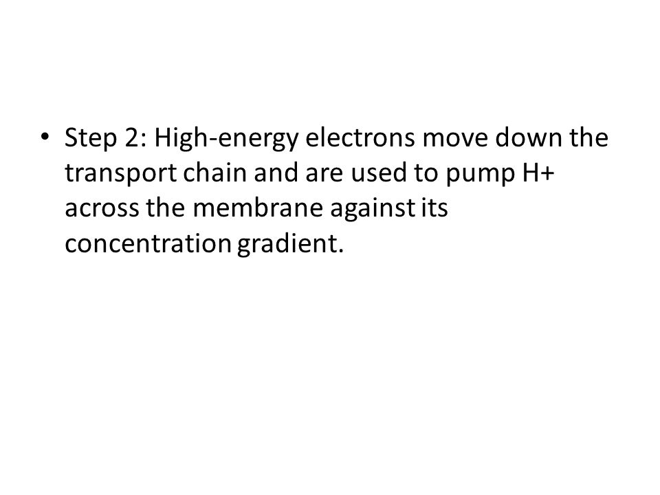 Step 2: High-energy electrons move down the transport chain and are used to pump H+ across the membrane against its concentration gradient.