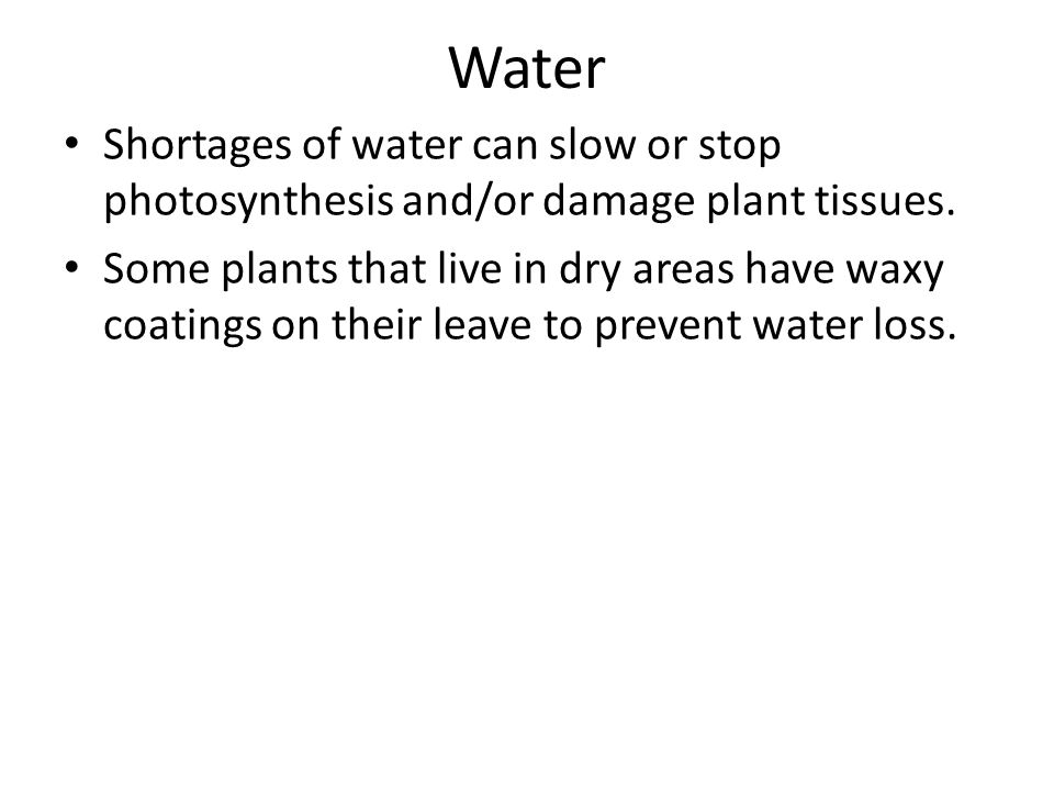 Water Shortages of water can slow or stop photosynthesis and/or damage plant tissues. Some plants that live in dry areas have waxy coatings on their l