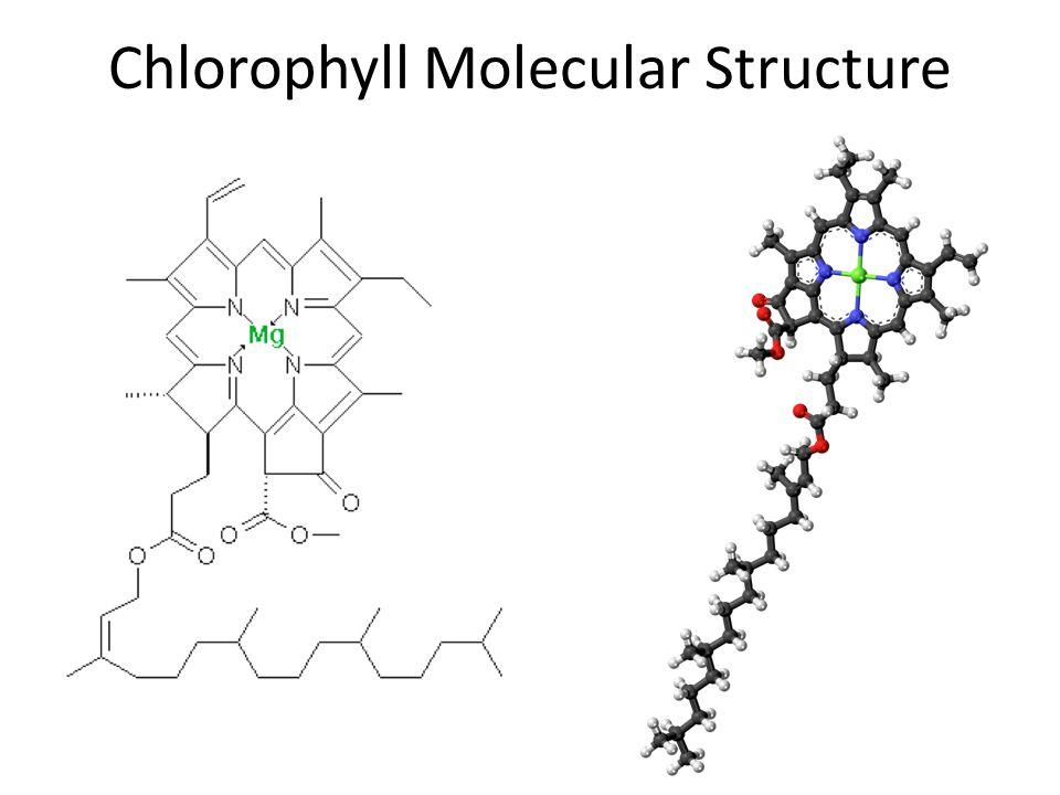 Chlorophyll Molecular Structure