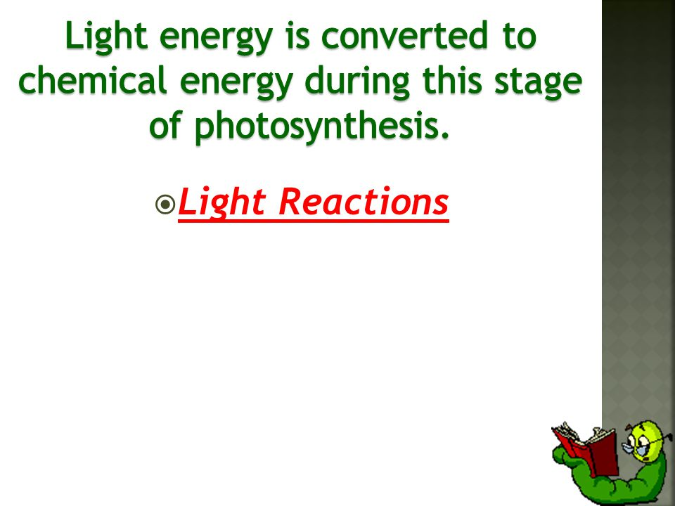  Light Reactions