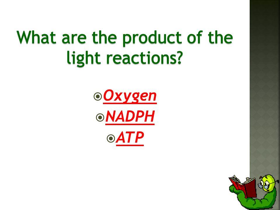  Oxygen  NADPH  ATP