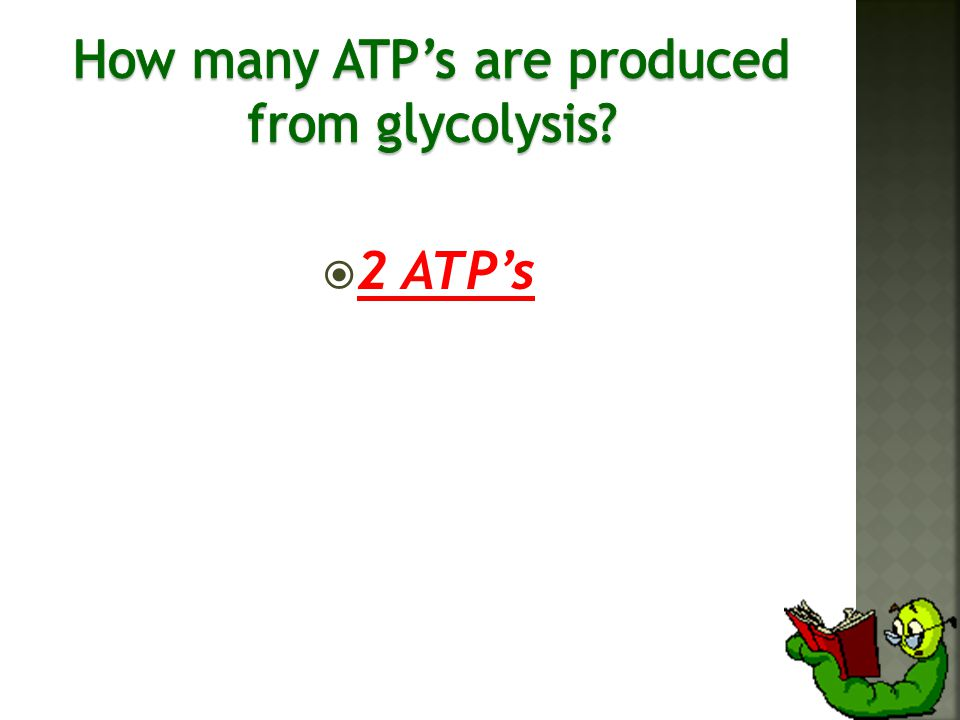  2 ATP's