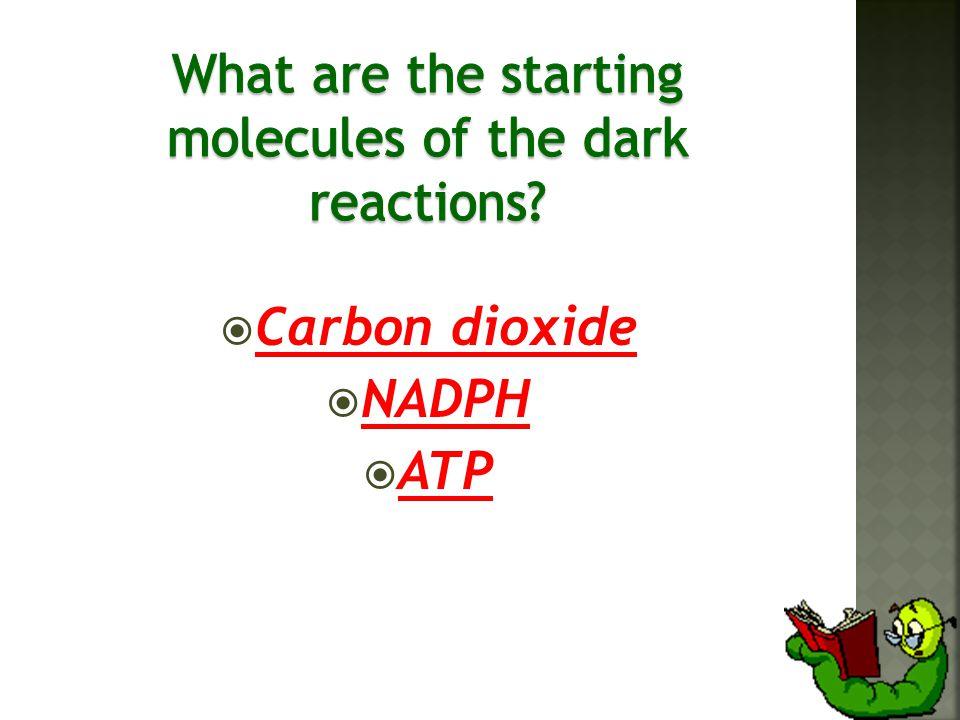  Carbon dioxide  NADPH  ATP