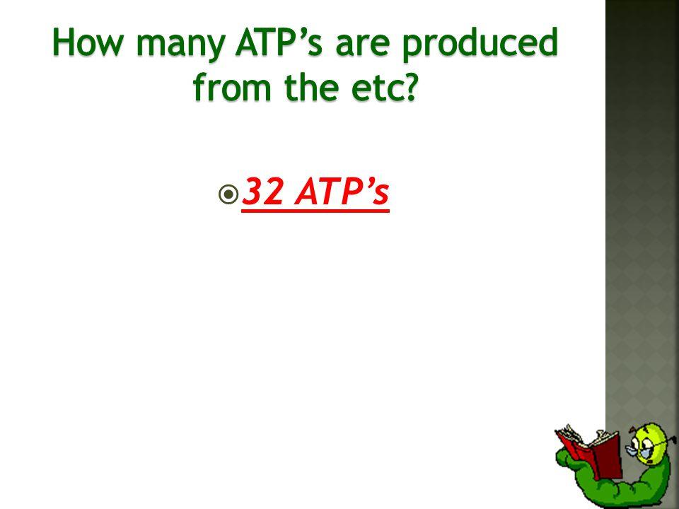  32 ATP's