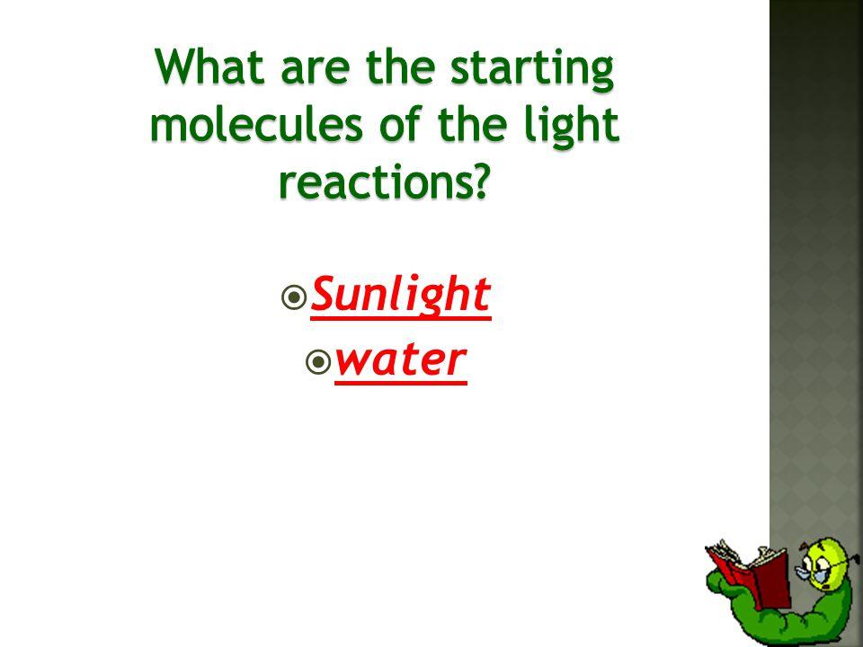  Sunlight  water