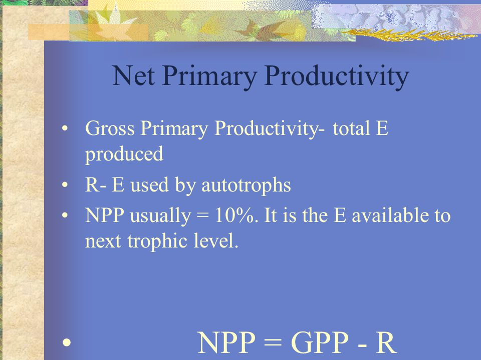 Net Primary Productivity Gross Primary Productivity- total E produced R- E used by autotrophs NPP usually = 10%.