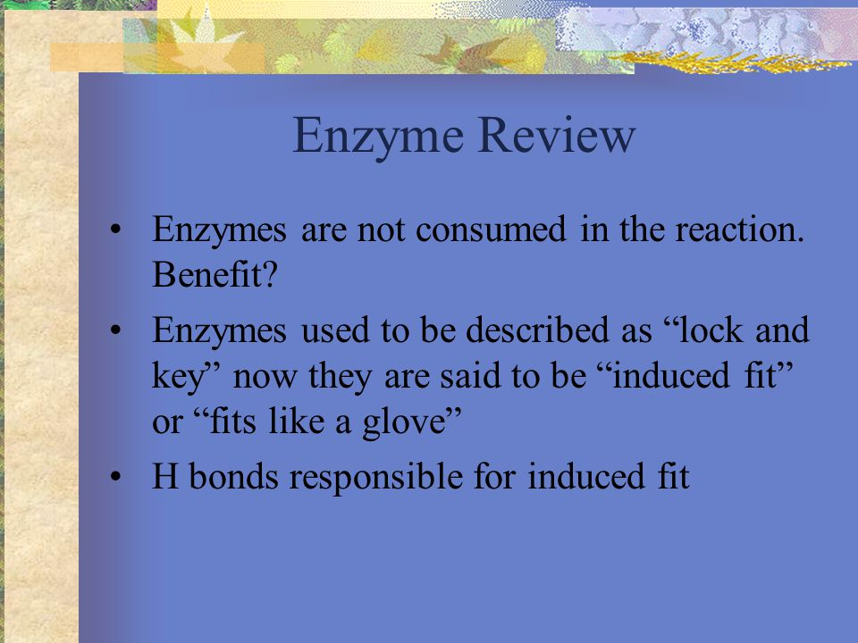 Enzyme Review Enzymes are not consumed in the reaction.