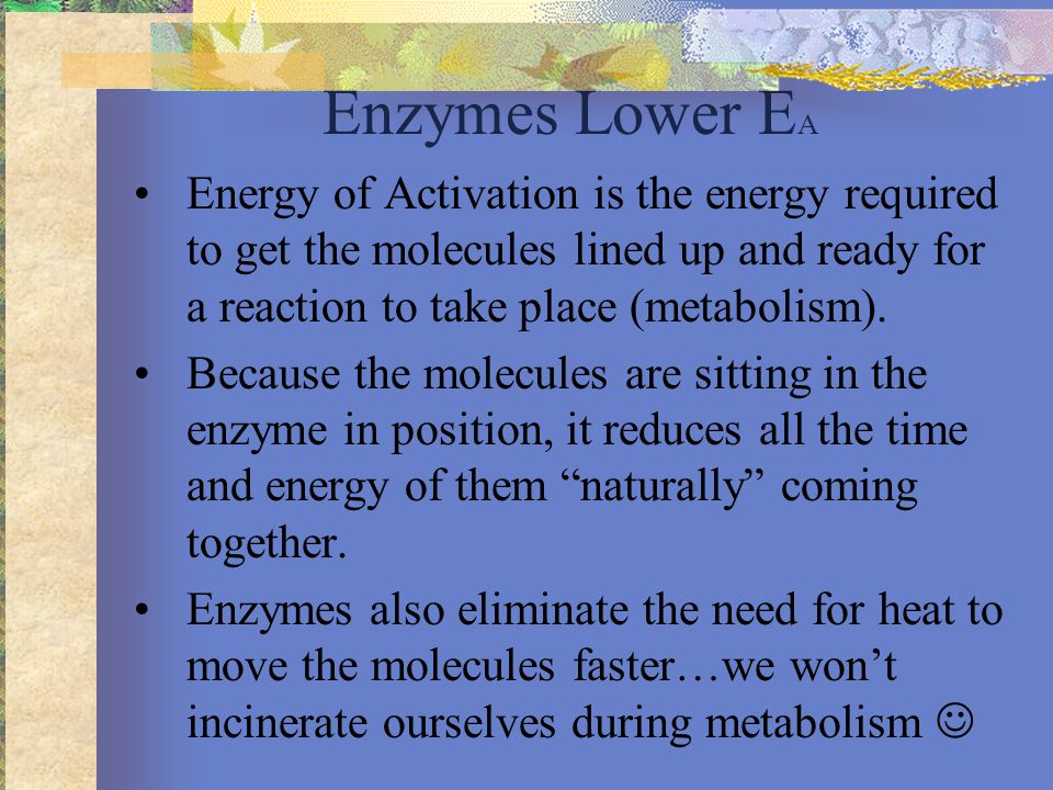 Enzymes Lower E A Energy of Activation is the energy required to get the molecules lined up and ready for a reaction to take place (metabolism).