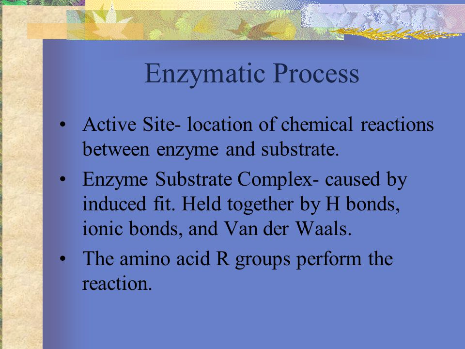 Enzymatic Process Active Site- location of chemical reactions between enzyme and substrate.