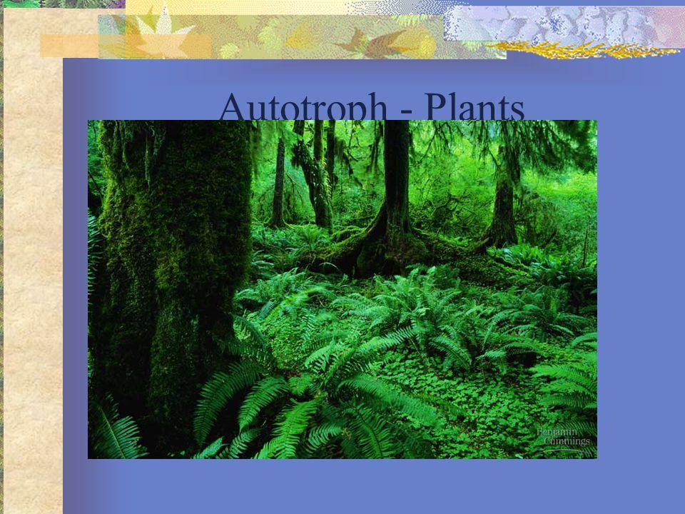 Autotroph - Plants
