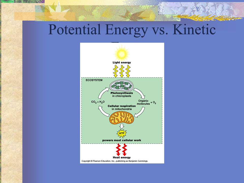 Potential Energy vs. Kinetic Energy
