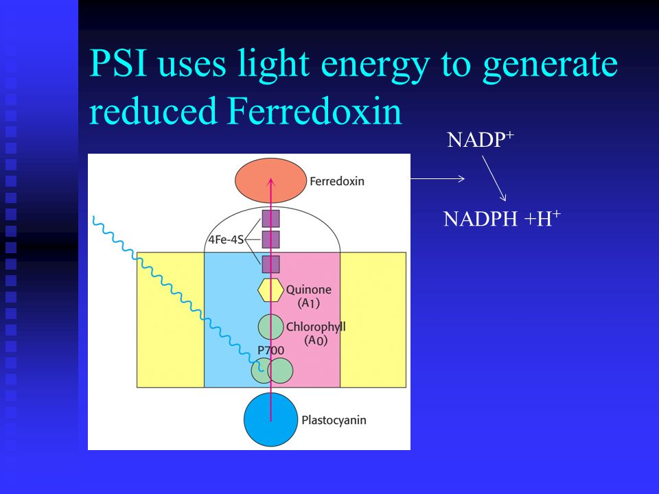 PSI uses light energy to generate reduced Ferredoxin NADPH +H + NADP +