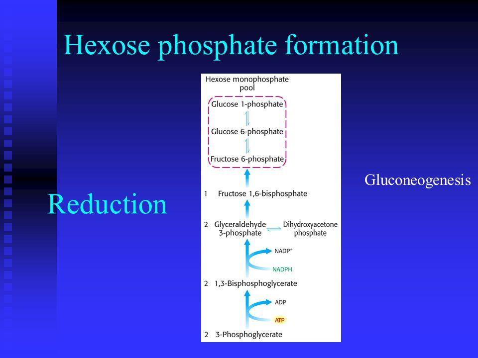 Reduction Gluconeogenesis Hexose phosphate formation