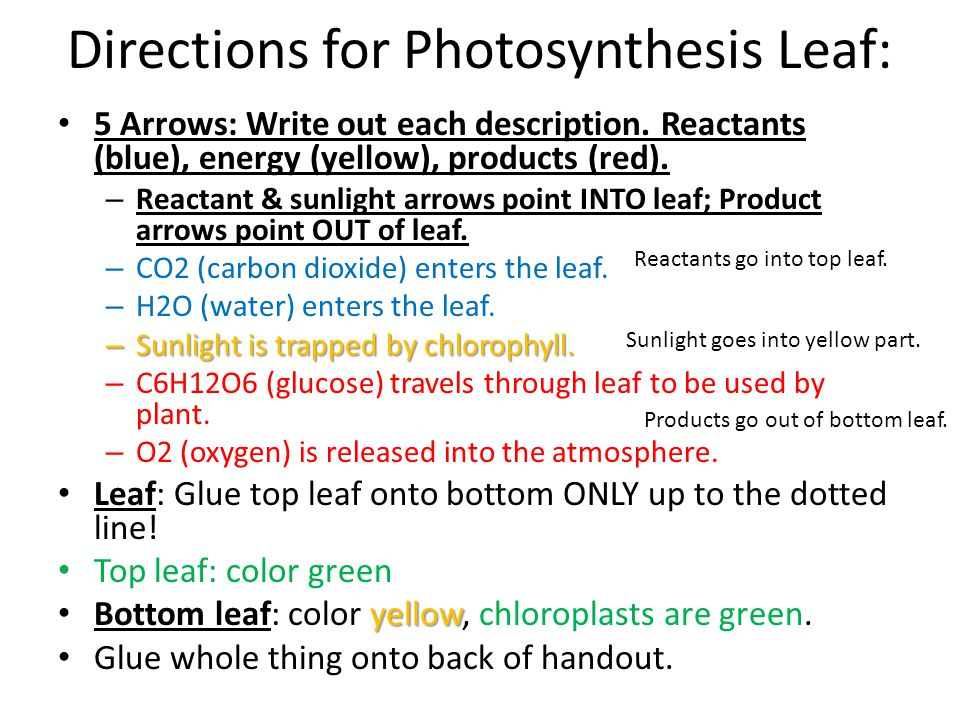 Directions for Photosynthesis Leaf: 5 Arrows: Write out each description. Reactants (blue), energy (yellow), products (red). – Reactant & sunlight arr
