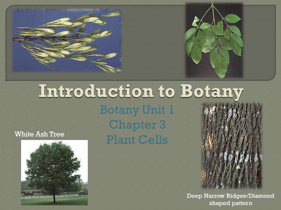 Botany Unit 1 Chapter 3 Plant Cells White Ash Tree Deep Narrow Ridges/Diamond shaped pattern