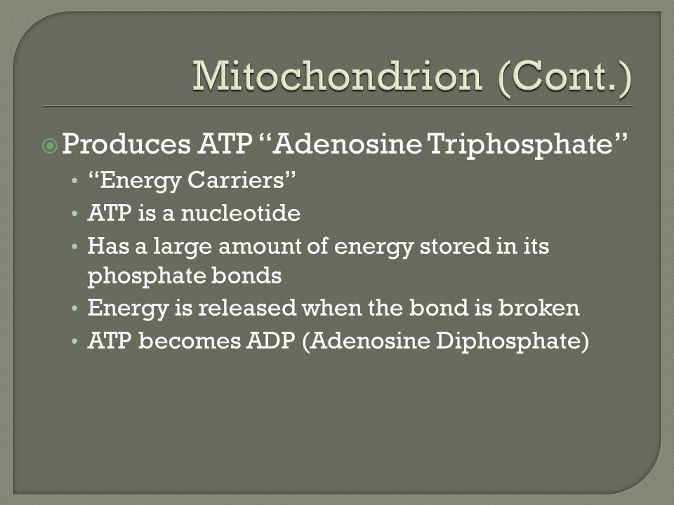 Produces ATP Adenosine Triphosphate Energy Carriers ATP is a nucleotide Has a large amount of energy stored in its phosphate bonds Energy is released when the bond is broken ATP becomes ADP (Adenosine Diphosphate)