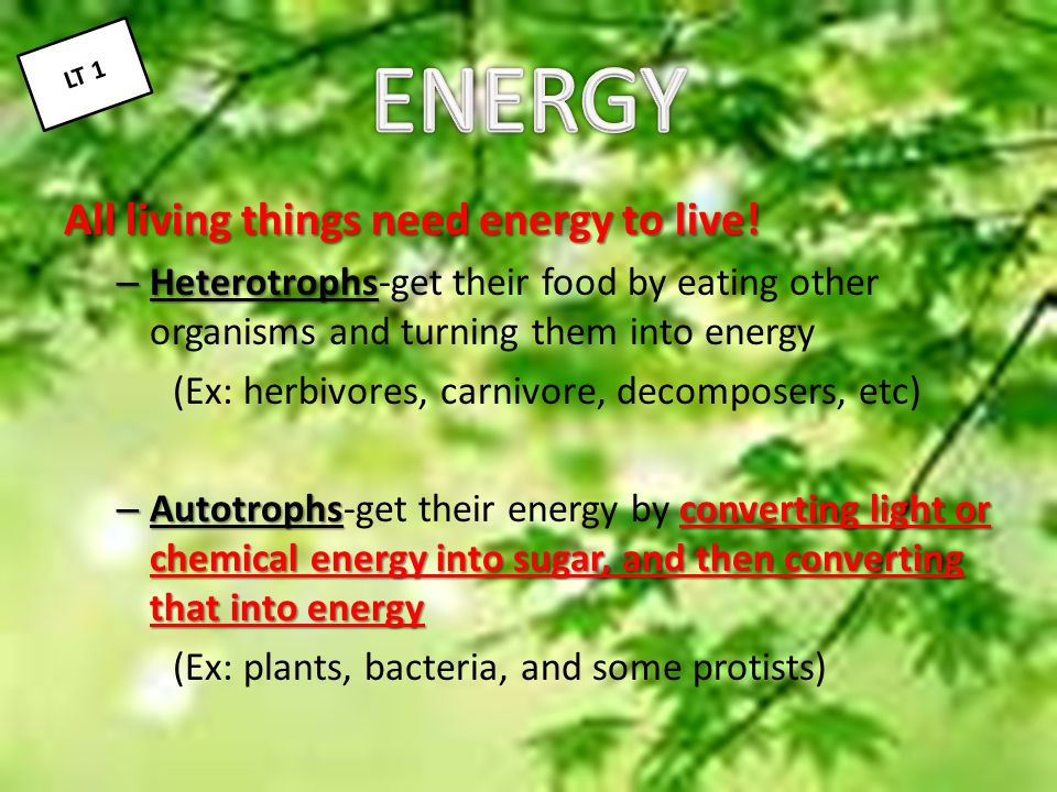 The cell will store energy in molecules like sugars and ATP The cell will store energy in molecules like sugars and ATP small stores of ATP – Most cells have small stores of ATP that only last a few seconds, but cannot store energy there long-term.