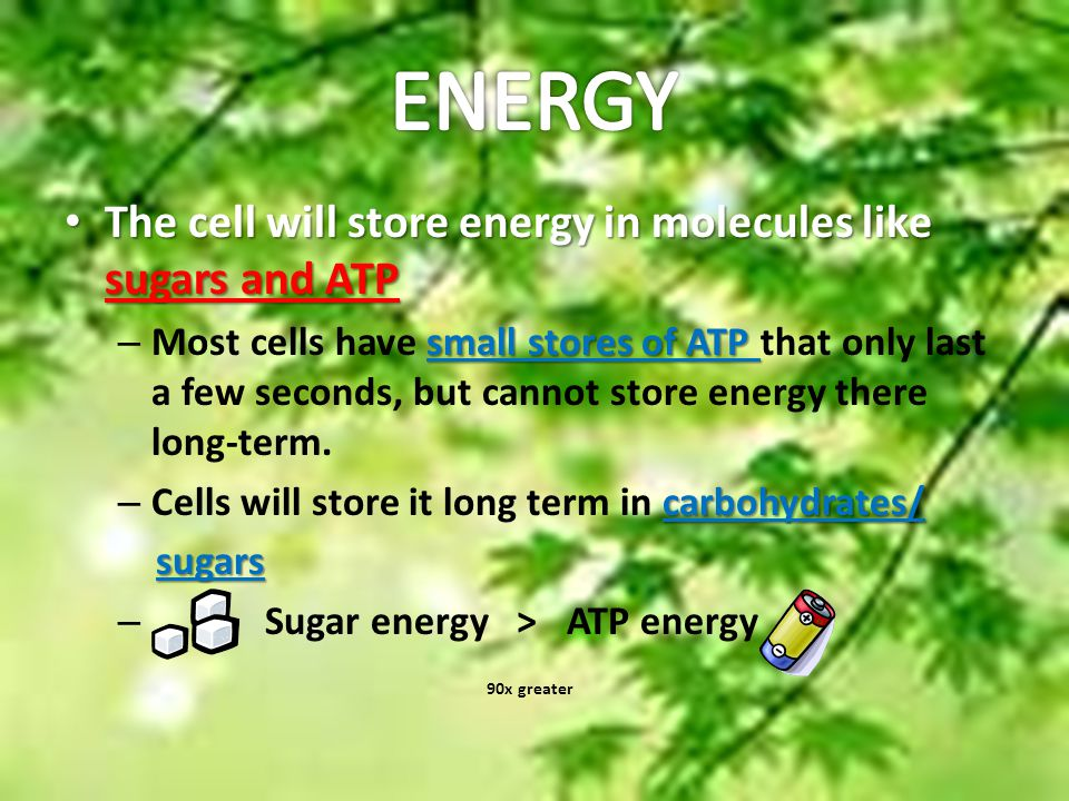 The Light Reaction I'm So Excited! e- electron carriers receive chlorophyll's electronsthe excited e-'s and pass get very excited from the them along to other sun's energy molecules.