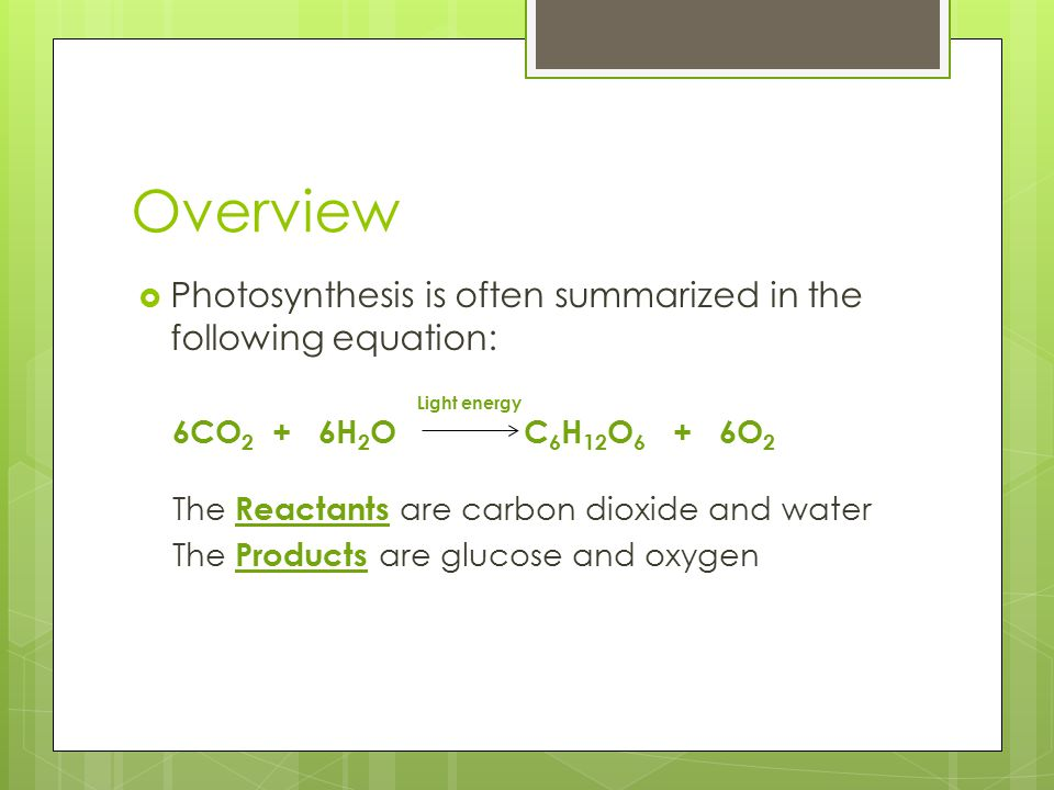 The Stages of Photosynthesis  There are two stages to the process  Light Reactions —light energy is converted to chemical energy, which is temporarily stored in ATP and the energy carrier molecule NADPH  Dark Reactions (Calvin Cycle) — organic compounds are formed using CO 2 and the chemical energy stored in ATP and NADPH http://bioweb.uwlax.edu/bio203/s2009/schroeer_ paul/images/484px- Simple_photosynthesis_overview_svg.png