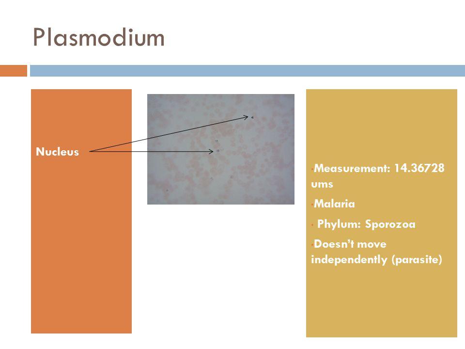 Plasmodium Nucleus Measurement: 14.36728 ums Malaria Phylum: Sporozoa Doesn't move independently (parasite)