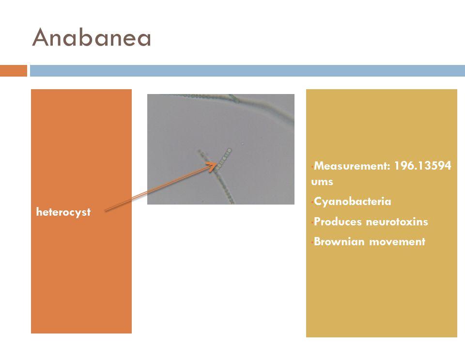 Anabanea heterocyst Measurement: 196.13594 ums Cyanobacteria Produces neurotoxins Brownian movement