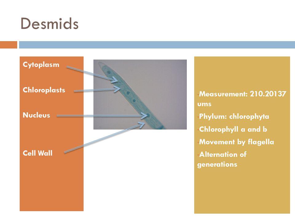 Desmids Cytoplasm Chloroplasts Nucleus Cell Wall Measurement: 210.20137 ums Phylum: chlorophyta Chlorophyll a and b Movement by flagella Alternation o