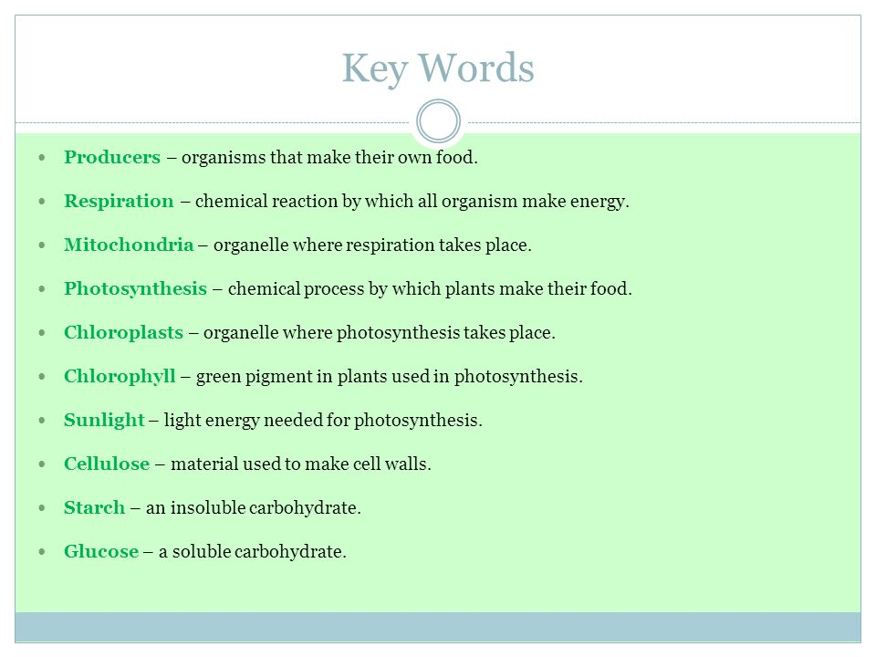 Key Words Producers – organisms that make their own food. Respiration – chemical reaction by which all organism make energy. Mitochondria – organelle