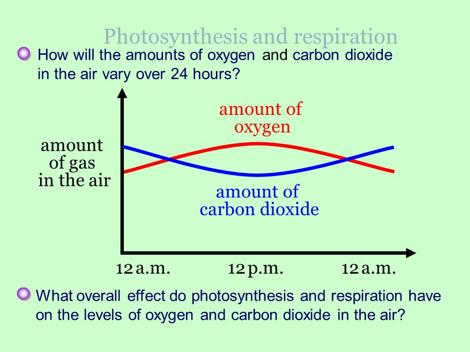 12 a.m. 12 p.m. 12 a.m. Photosynthesis and respiration How will the amounts of oxygen and carbon dioxide in the air vary over 24 hours? What overall e