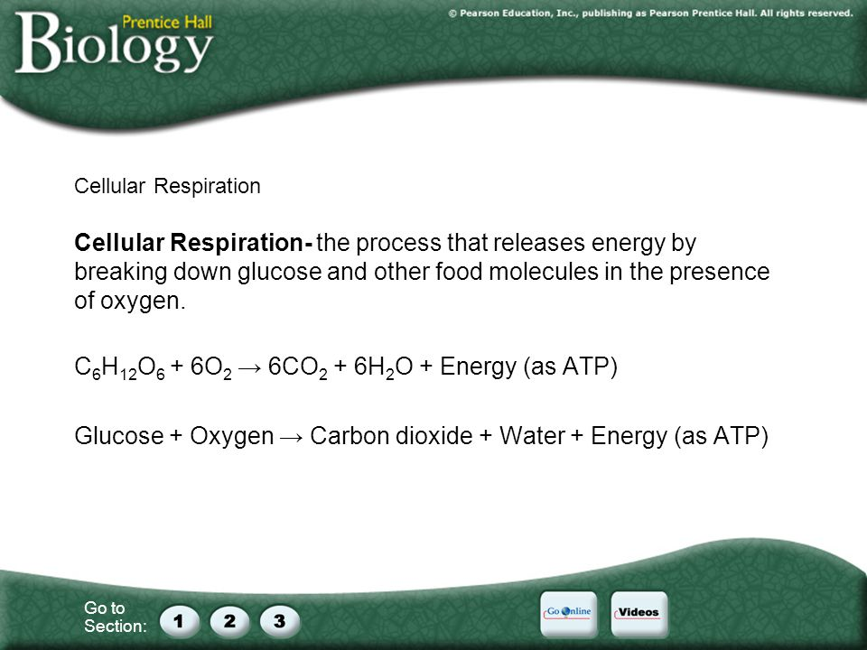 Go to Section: Cellular Respiration Cellular Respiration- the process that releases energy by breaking down glucose and other food molecules in the presence of oxygen.