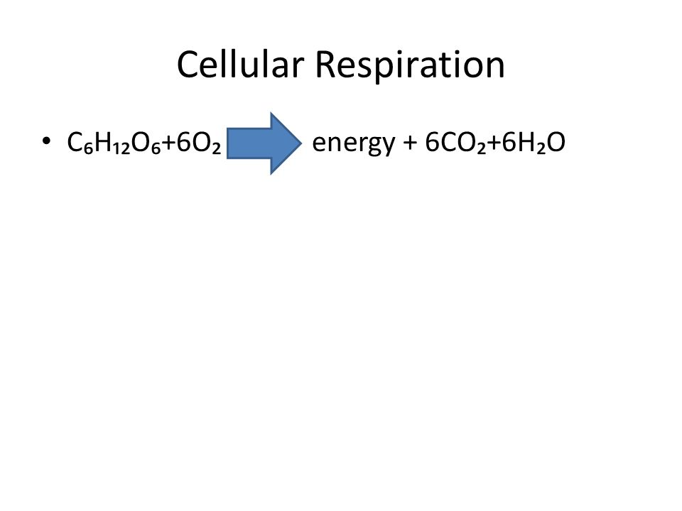 Cellular Respiration C₆H₁₂O₆+6O₂ energy + 6CO₂+6H₂O