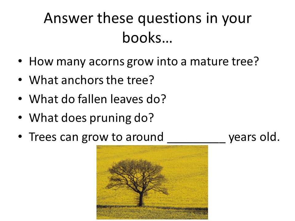 Answer these questions in your books… How many acorns grow into a mature tree? What anchors the tree? What do fallen leaves do? What does pruning do?