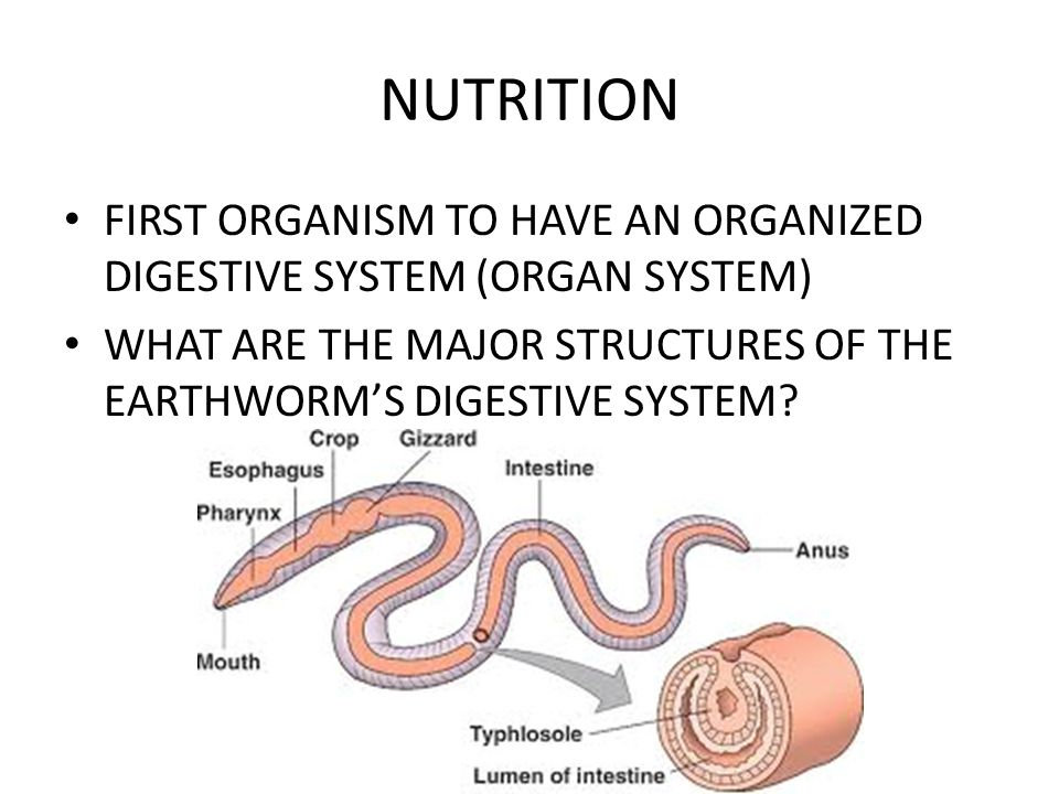 NUTRITION FIRST ORGANISM TO HAVE AN ORGANIZED DIGESTIVE SYSTEM (ORGAN SYSTEM) WHAT ARE THE MAJOR STRUCTURES OF THE EARTHWORM'S DIGESTIVE SYSTEM?